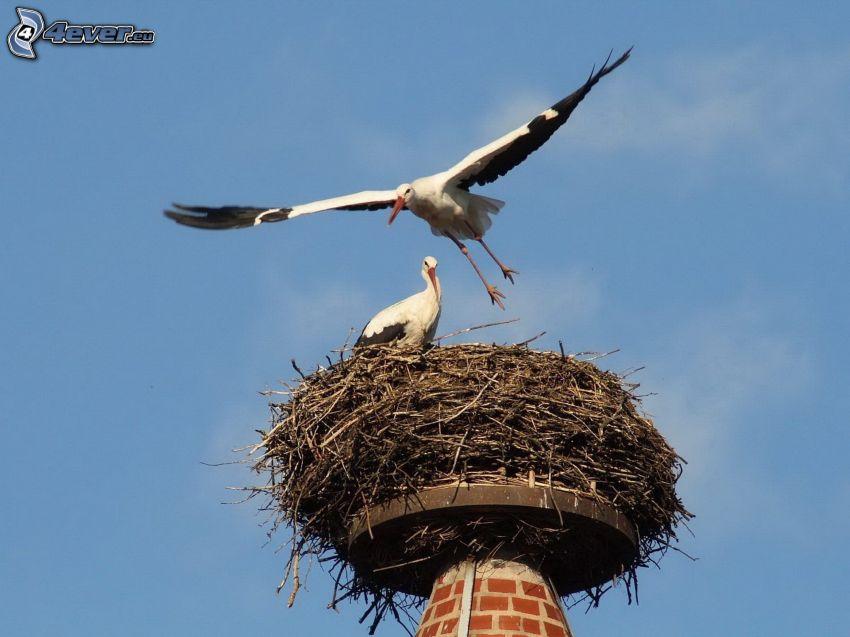 Störche, Nest