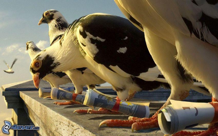 Tauben, Geldscheine, Mauerchen