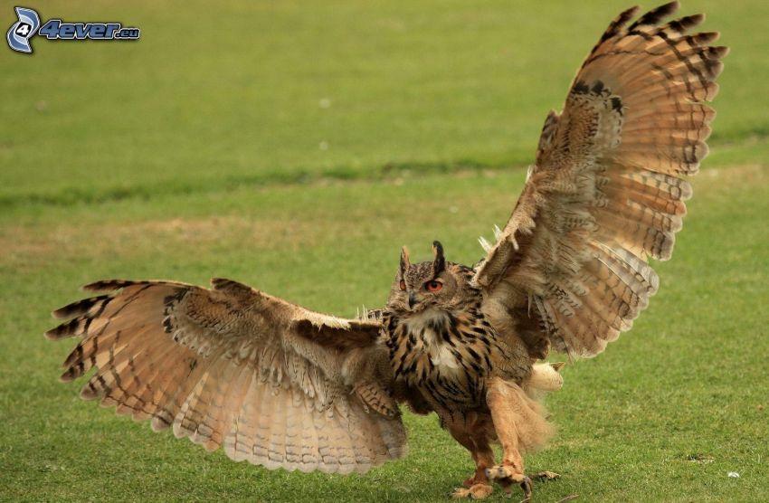 uhu, Flügel