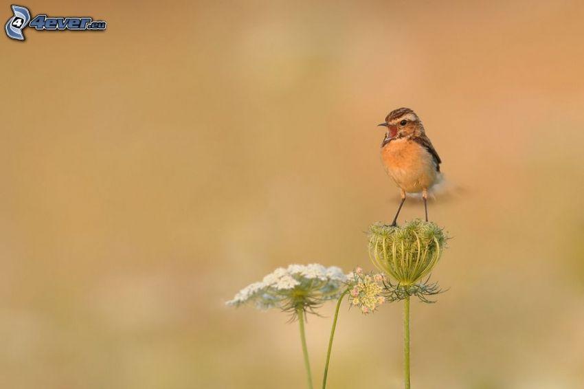 Vögel, Blume