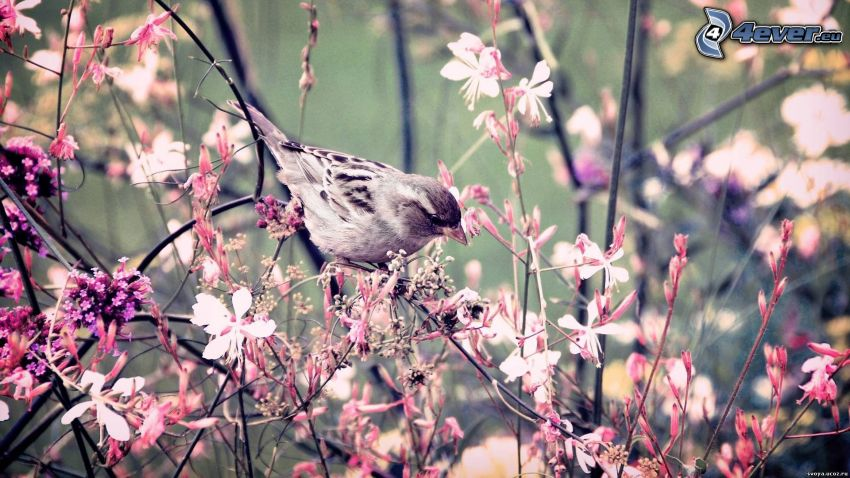 Vögel, Blumen