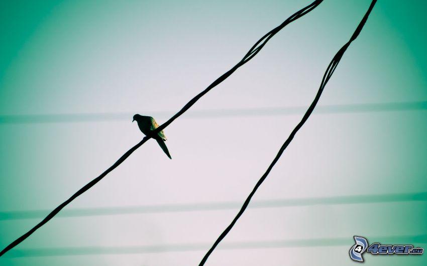 Vogel, Drähte