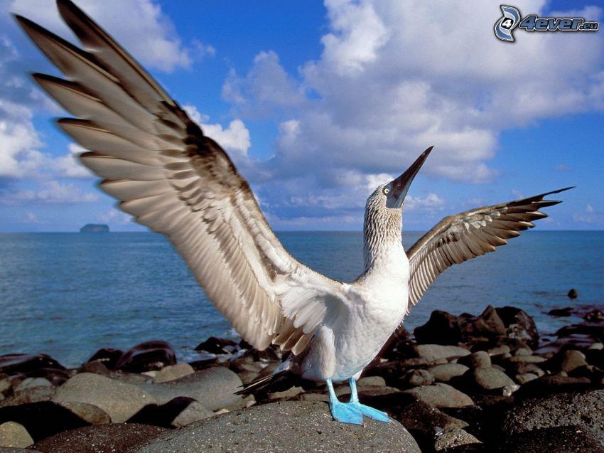 Vogel, Flügel, Küste