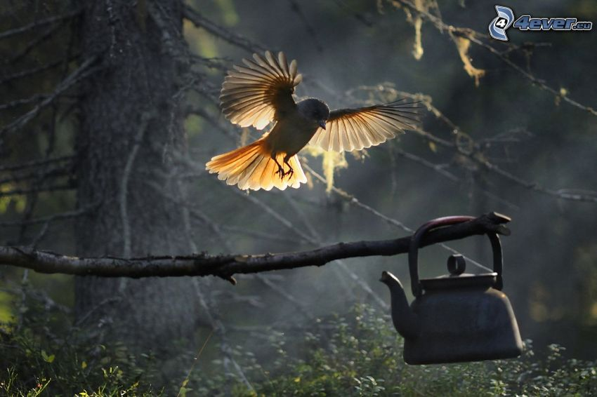 Vögel, Flügel, Landung, Ast, Pfeifkessel