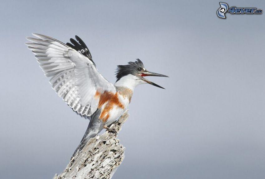 Vögel, Flügel
