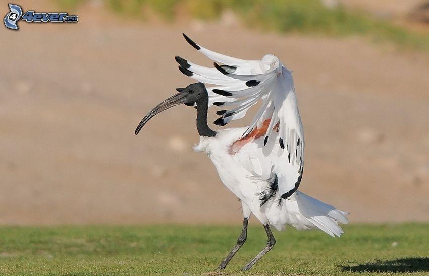 Vogel, Flügel