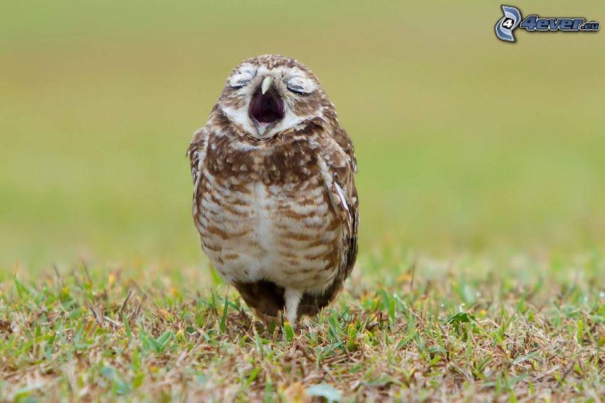 Vogel, Gähnen