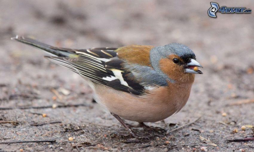 Vögel, Nahrung