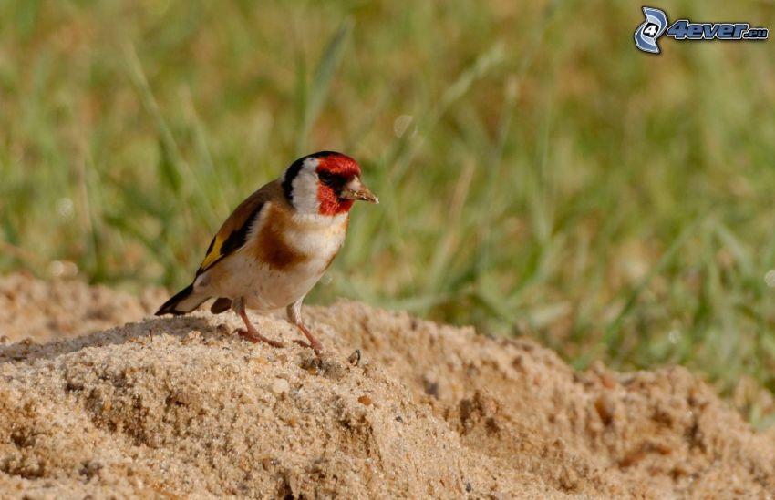 Vögel, Sand