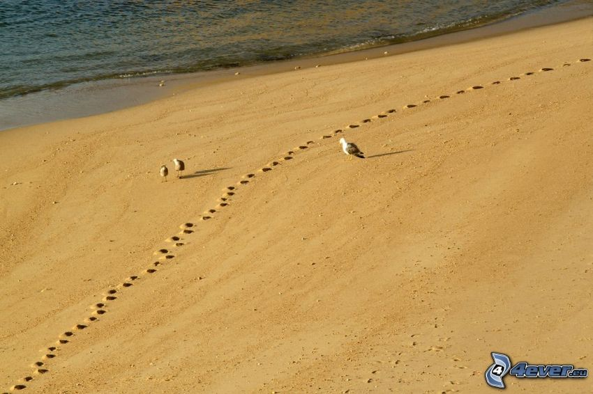 Vögel, Sandstrand, Fußspuren im Sand