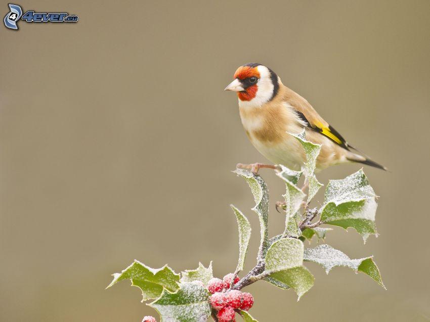 Vögel, Vogel auf einem Zweig