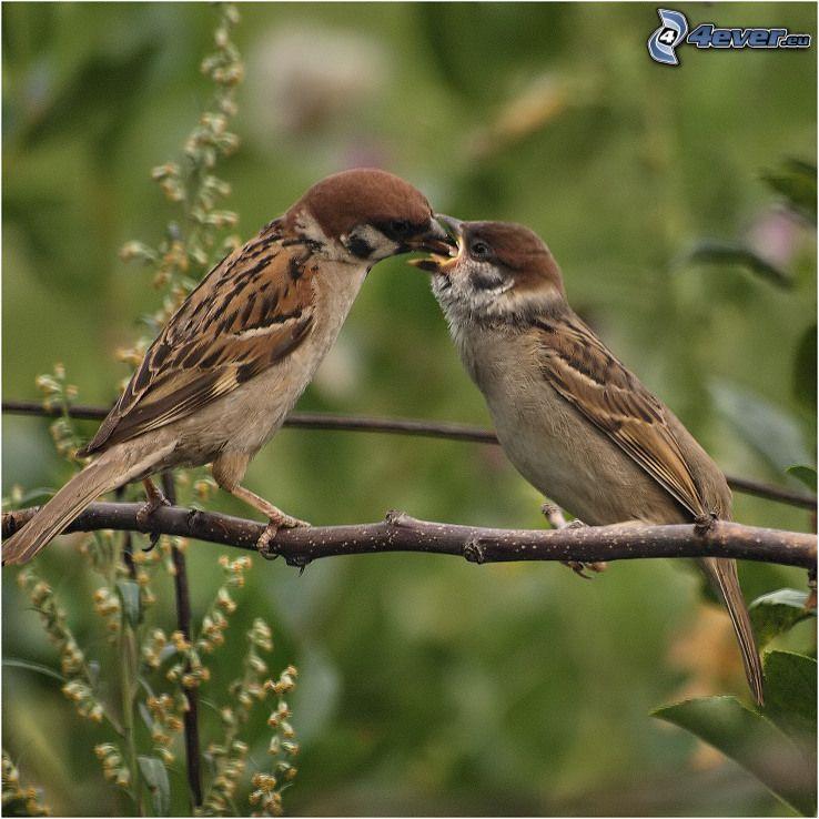 Vögel auf einem Ast, fütterung