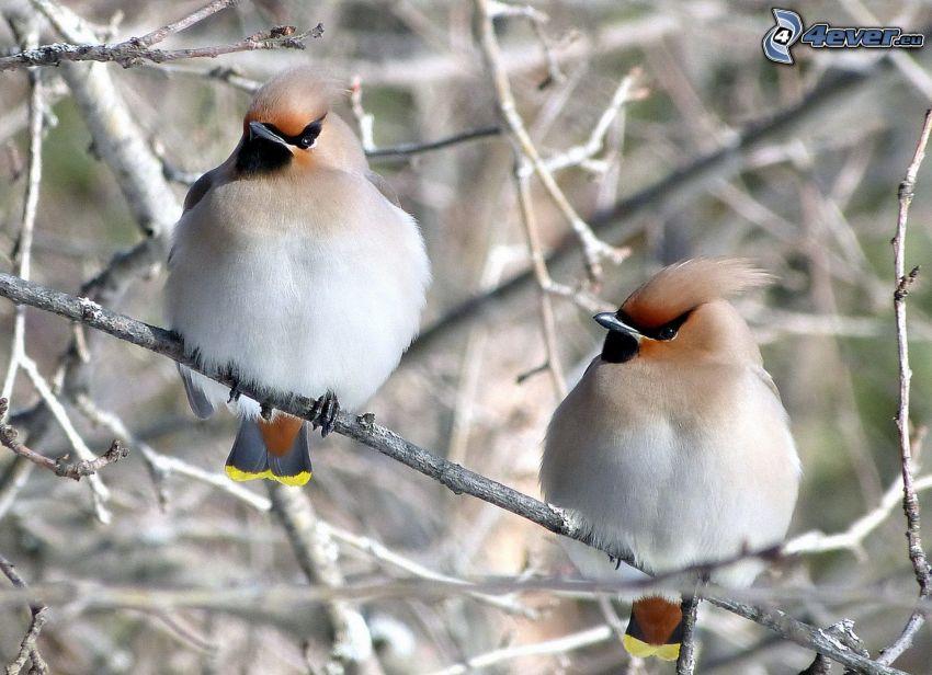 Vögel auf einem Ast