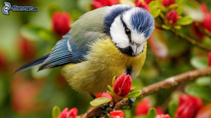 Vogel auf einem Zweig, aufgeblühter Ast