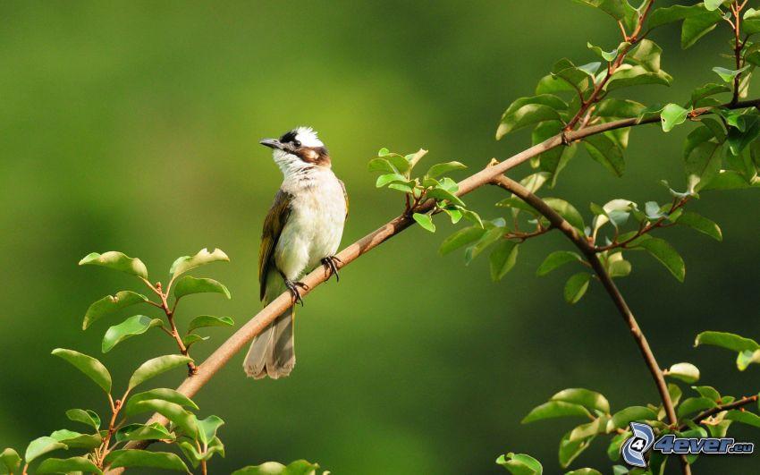 Vogel auf einem Zweig, Blätter
