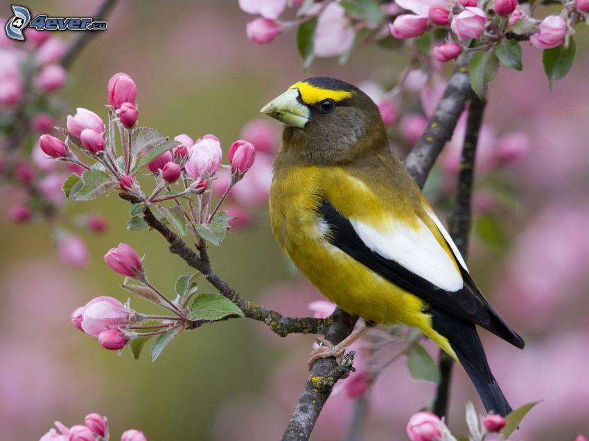 Vogel auf einem Zweig, blühender Baum