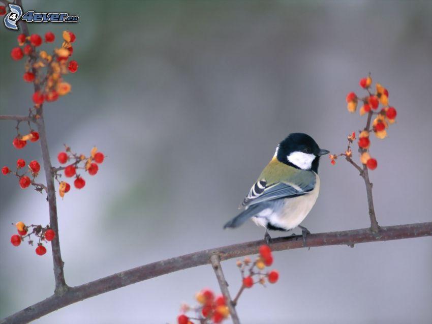 Vogel auf einem Zweig, Meise
