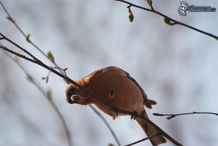 Vogel auf einem Zweig