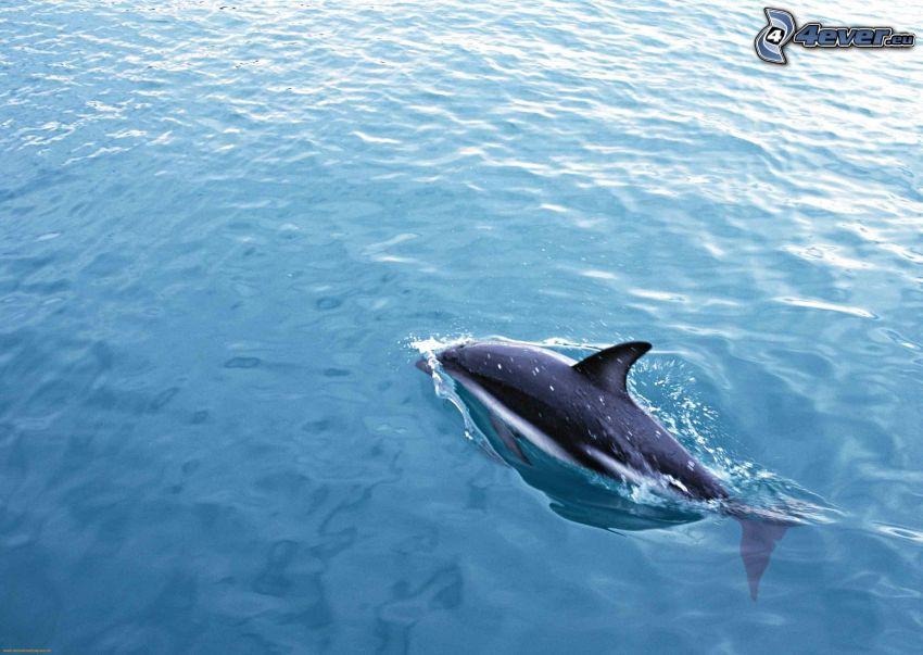 Delfin, Wasser