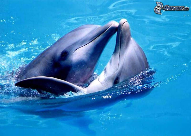 Delphine, Wasser, Bassin