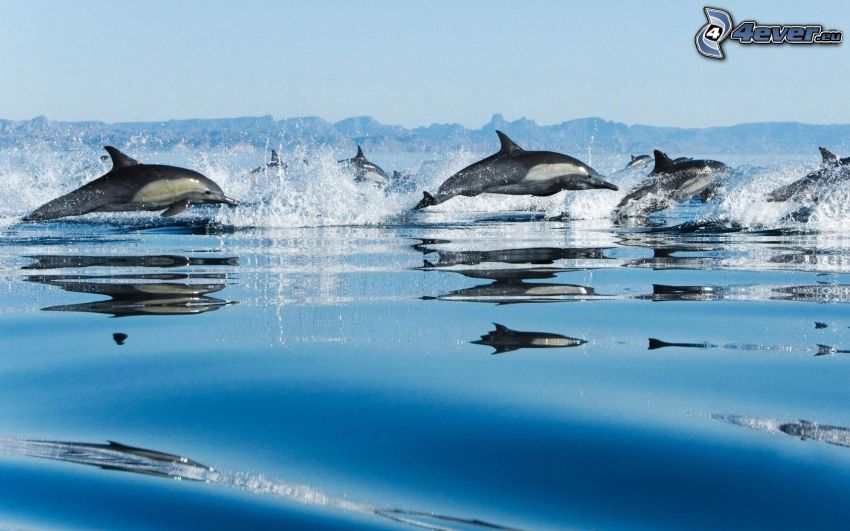 Delphine, Wasser