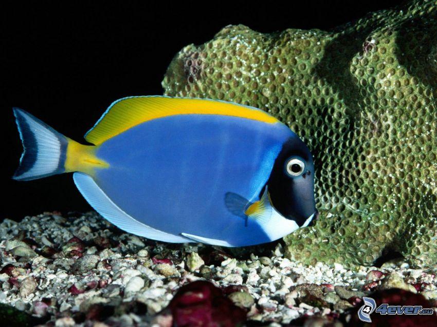 Fisch, Korallen