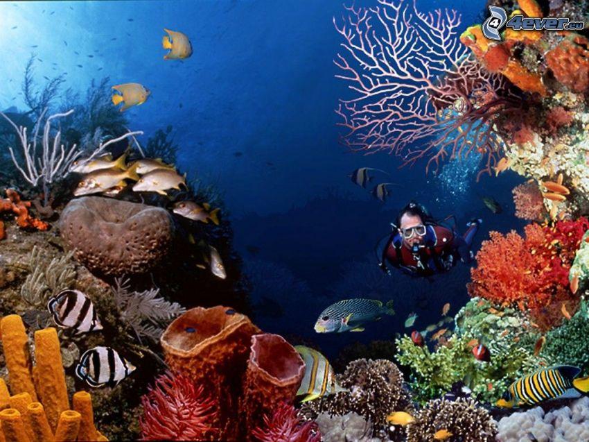 Korallenriff, Taucher, Meer