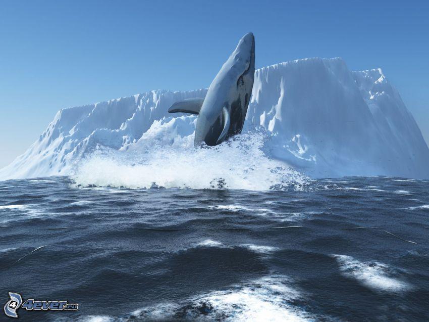 Wal, Gletscher
