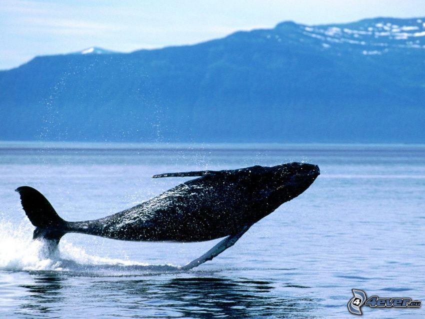 Wal, Meer, Hügel