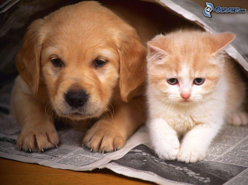 Welpen und Kätzchen, Zeitung