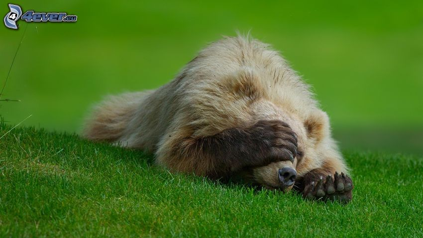 Bär, Pfote, grünes Gras