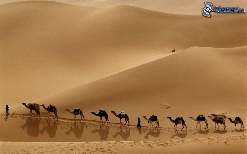 Beduinen, Kamele, Wüste