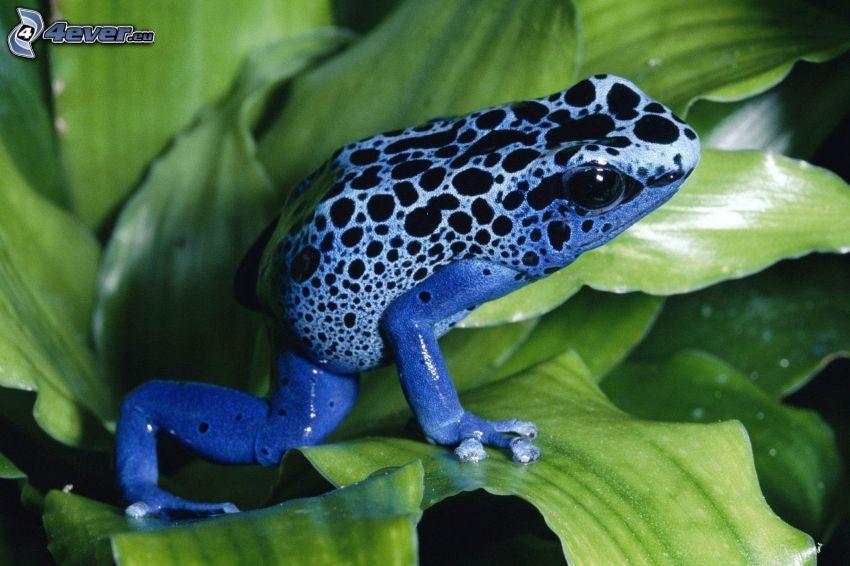 blue Frog, grüne Blätter