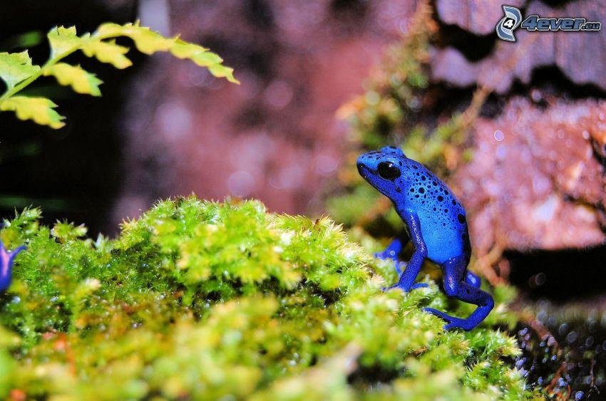 blue Frog, Moos