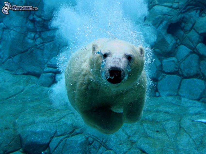 Eisbär, Blasen