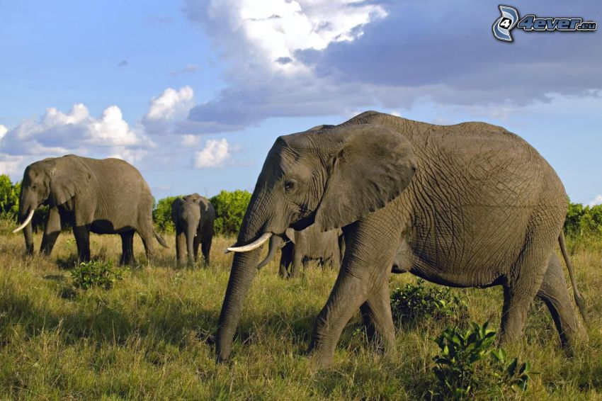 Elefanten, Wolken