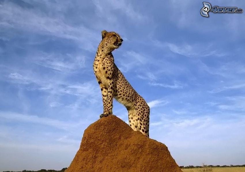 Gepard, Ton, Hügel