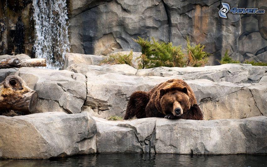 Grizzlybär, Schlafen, Felsen