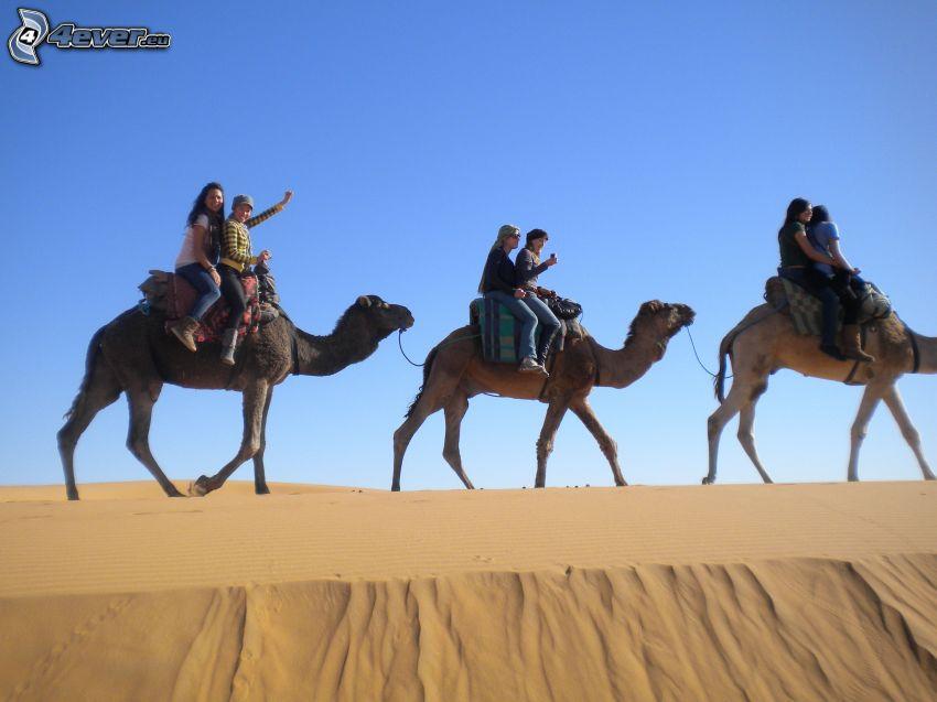 Kamele, Touristen, Sand