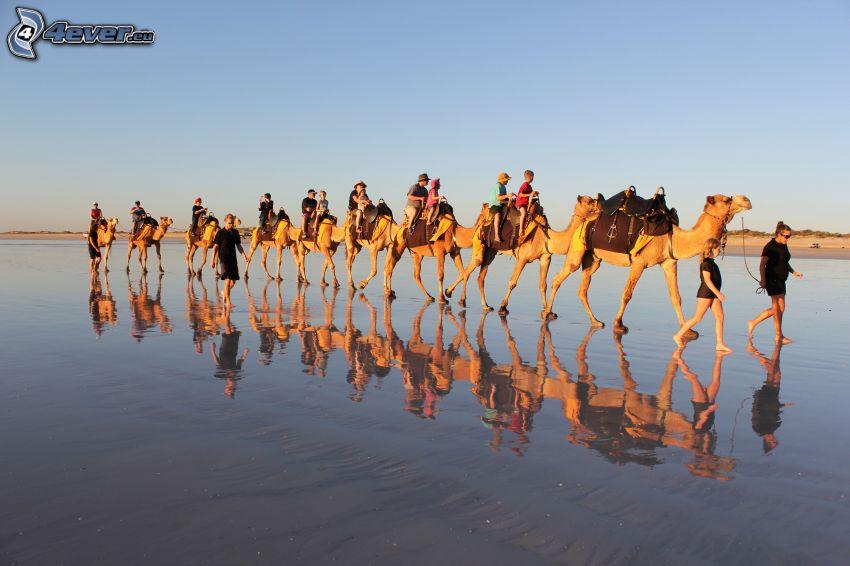 Kamele, Touristen, Spiegelung