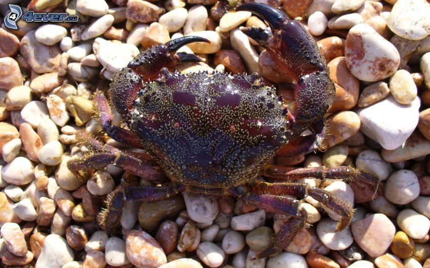 Krabbe, Steine
