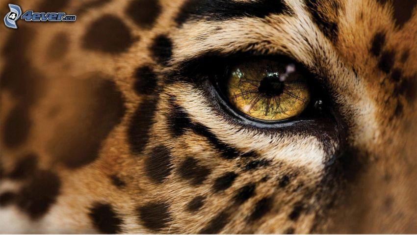 Leopard, Auge der Bestie
