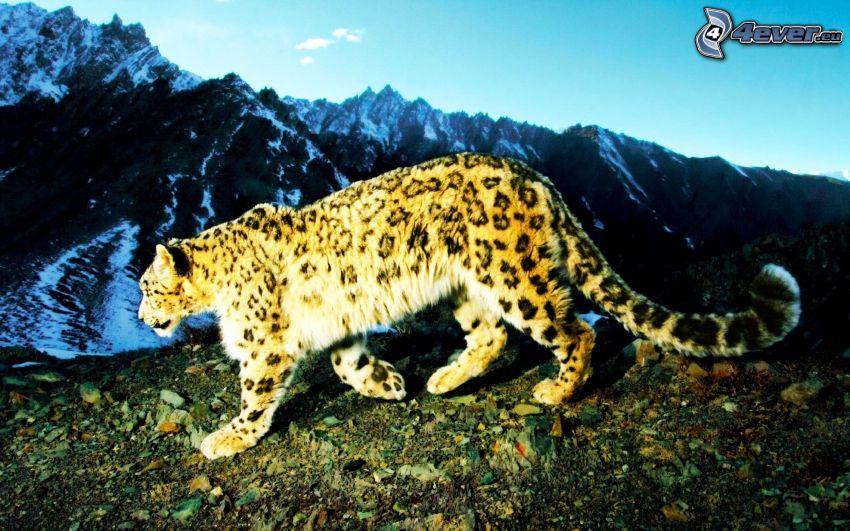 Leopard, Berge