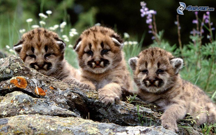 Leoparden, Jungtiere, Holz