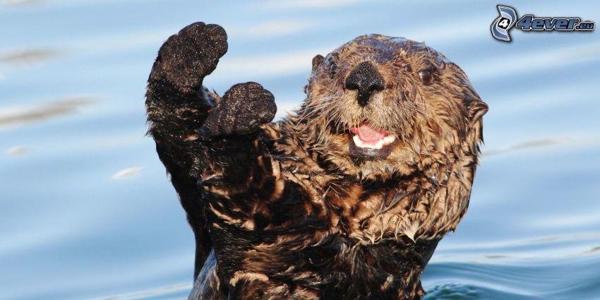 Otter, Gruß, Freude