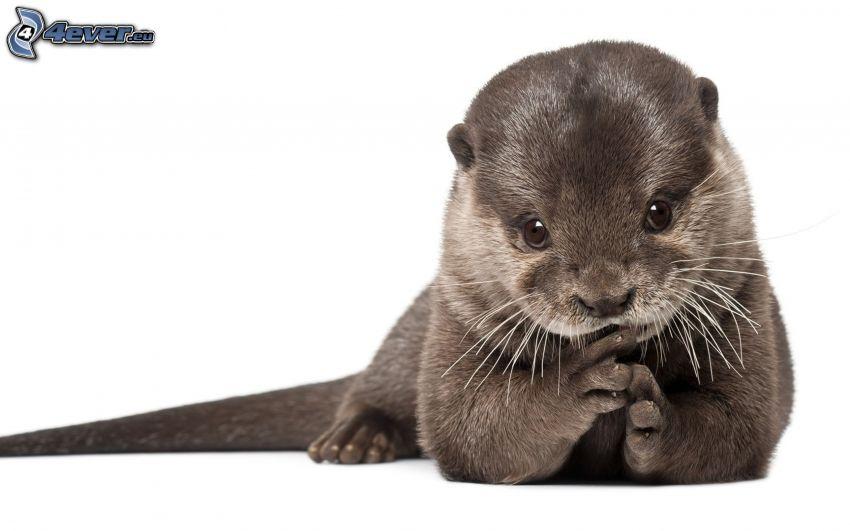 Otter, Jungtier