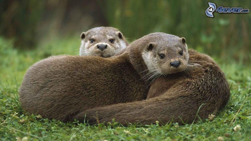 Ottern