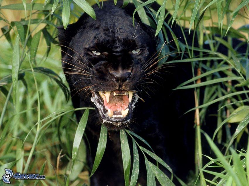 Panther, Pflanzen