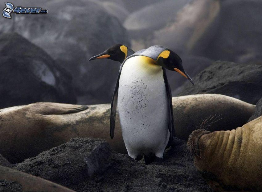 Pinguine, Robben