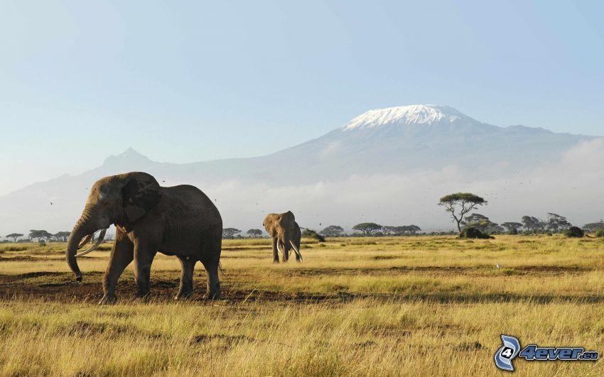 Savanne, Elefanten, Kilimandscharo